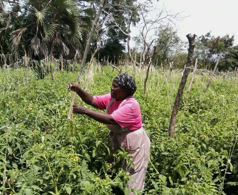 Le Rapport 2017 sur l'état de l'agriculture en Afrique lancé — AGRF