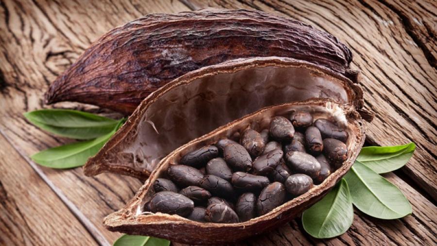 Des milliers de tonnes de feves de cacao seront transformu00e9s dans la nouvelle usine.