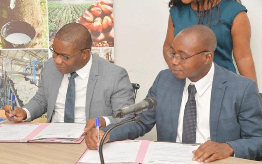 Le Dg du Conseil hu00e9vu00e9a-palmier u00e0 huile (u00e0 droite) et le secru00e9taire gu00e9nu00e9ral du Bnetd (u00e0 gauche) signant lu2019accord de partenariat.