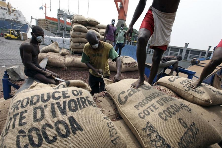 Côte d'ivoire : chute des prix du cacao de près de 37%