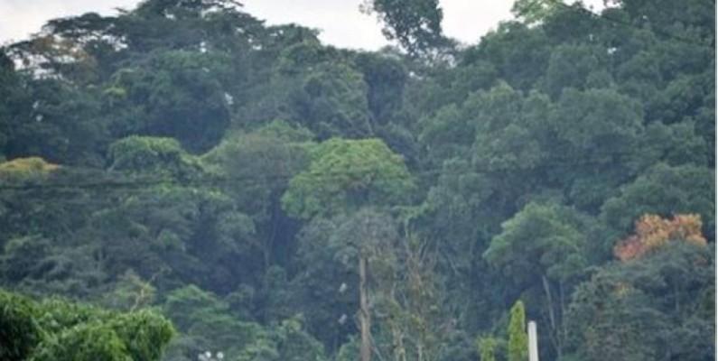 Une vue d'une forêt dense. (DR)