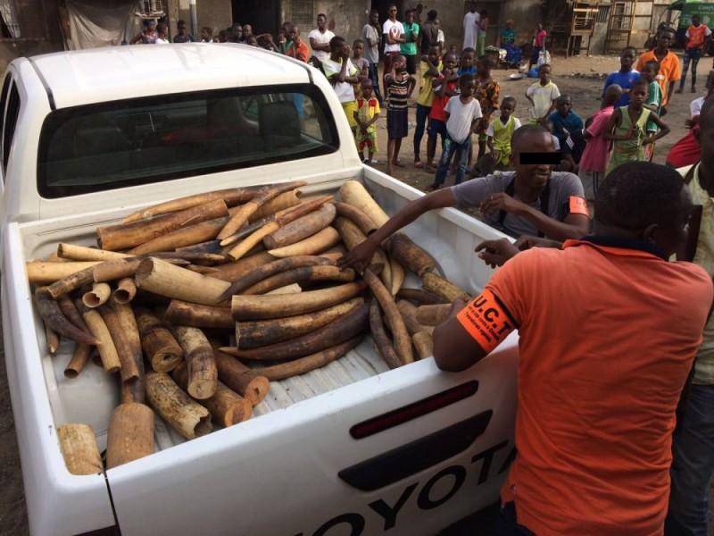 En Côte d'Ivoire, il ne reste que 300 aujourd'hui (DR)