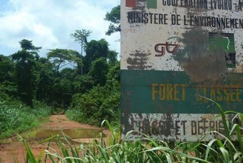 Une vue de l'entrée de la forêt classée du Mont Péko. (DR)