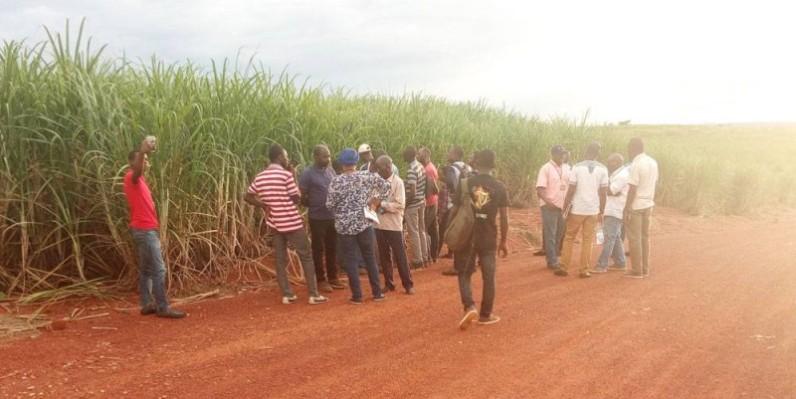 Les acteurs dans une plantation de canne à sucre. (DR)