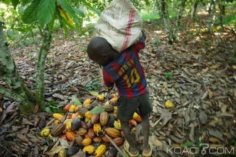 Une image d'archive d'un enfant travaillant dans la cacaoculture.(DR)