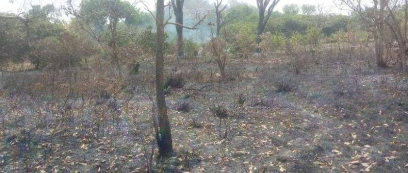 Les feux de brousse sont récurrents en période de sécheresse (DR)