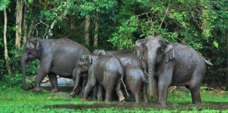 Le parc de Taï dans toute sa splendeur dédiée à la sauvegarde du patrimoine naturel. (DR)