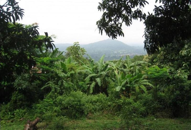Image d'une forêt. (Dr)