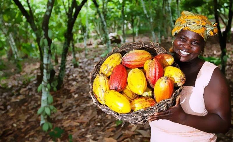 Cacao de Côte d'Ivoire (DR)