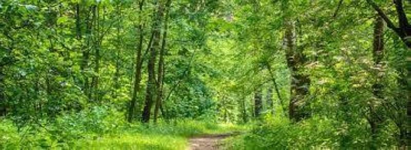 Une forêt, source de vie. (DR)