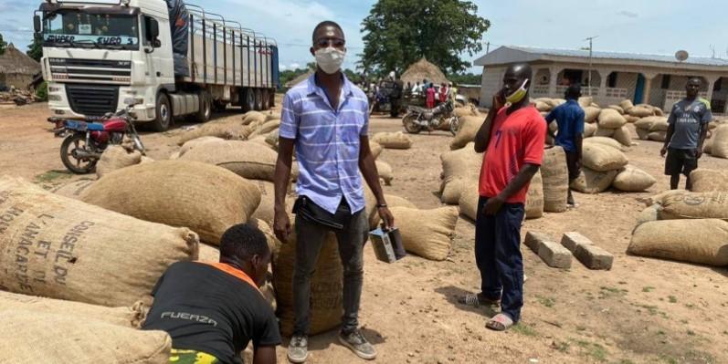 Les producteurs d'anacarde ont réalisé une bonne opération dans la localité de Gbalo, dans le Worodougou. (DR)
