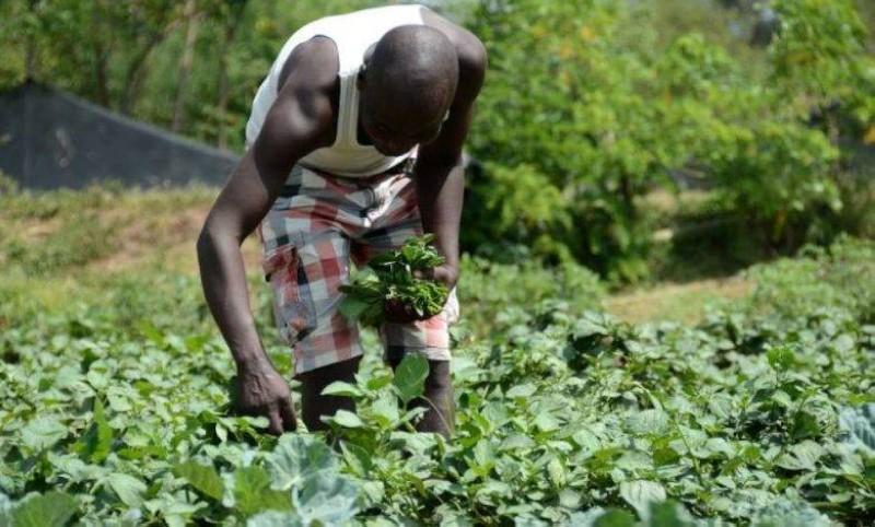 Formé à l'Institut Confucius de Dakar, un jeune Sénégalais a créé une ferme agricole à Touba