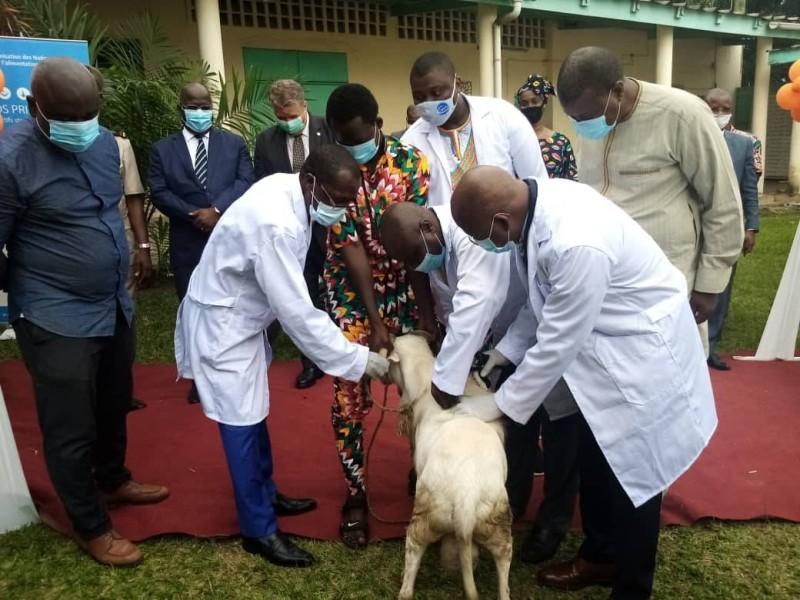 Le ministre Moussa Dosso procédant à la vaccination d'un bélier. (DR)