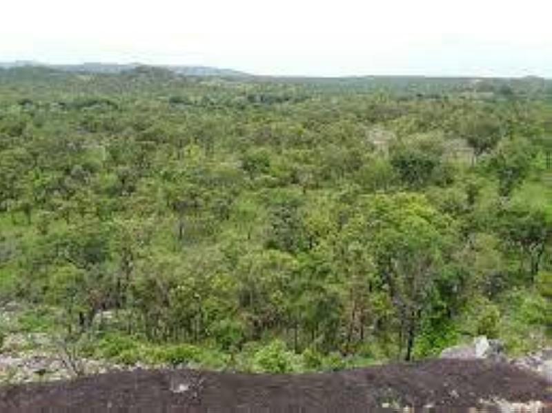 Une vue du parc de la Comoé. (DR)
