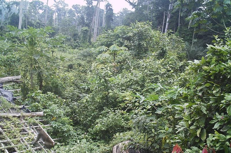 Un campement des ex-infiltrés envahi par la végétation. (DR)