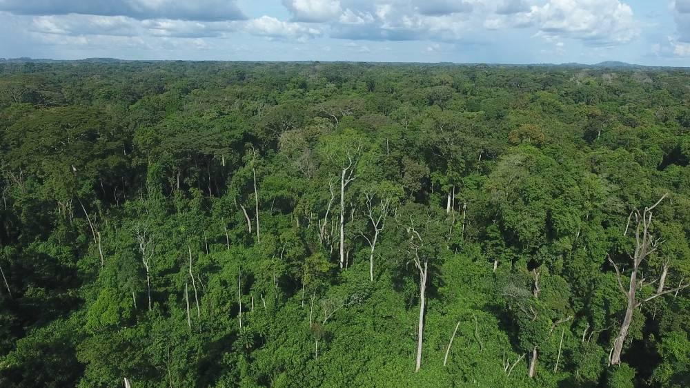 La forêt classée du Cavally fait partie des 234 forêts classées que compte la Côte d'Ivoire. (DR)
