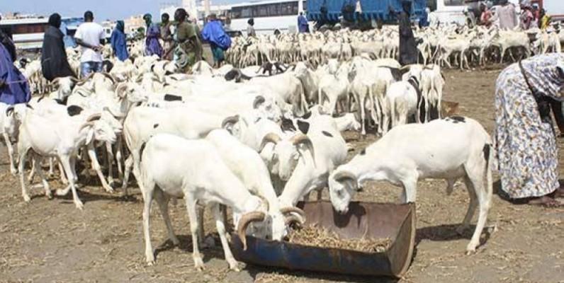 Des moutons en vente pour la fête de Tabaski. (DR)