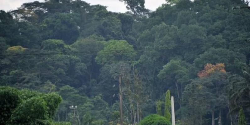 Le Parc national de Taï est la plus grande forêt tropicale primaire sous protection de toute la zone ouest africaine. (DR)