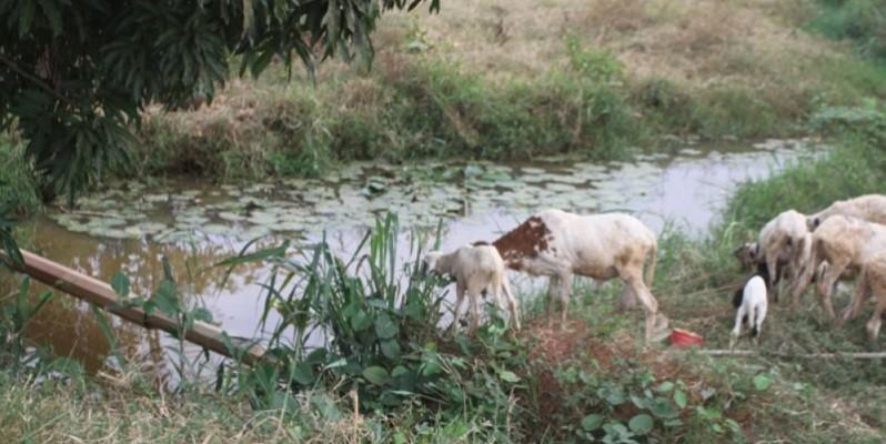 Les plus hautes autorités d'Arrah projettent de faire un aménagement touristique autour de la rivière Djabo qui a été abandonnée. (Photos: Véronique Dadié)