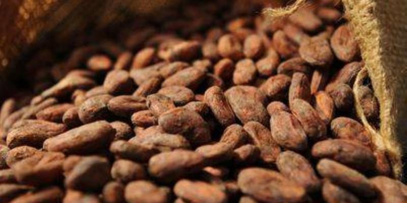 Les meilleurs producteurs du cacao ont été primés par le premier ministre, Hamed Bakayoko. (Dr)