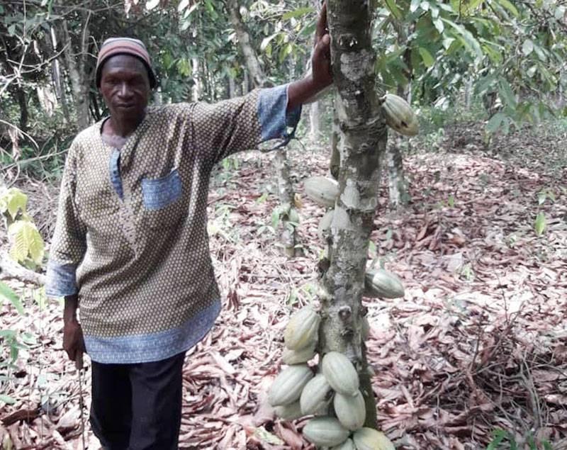 Le producteur est heureux du rendement de la nouvelle variété de cacao bio. (Dr)