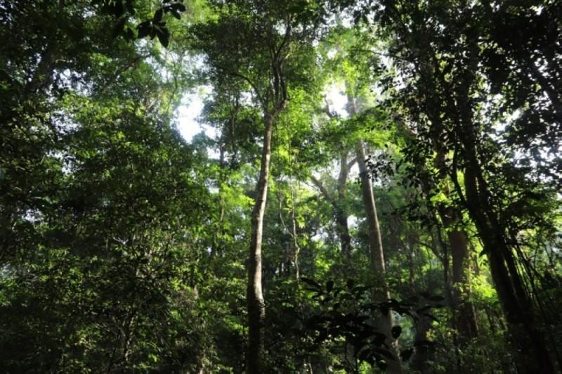 Le gouvernement est déterminé à restituer le couvert forestier ivoirien. (Dr)