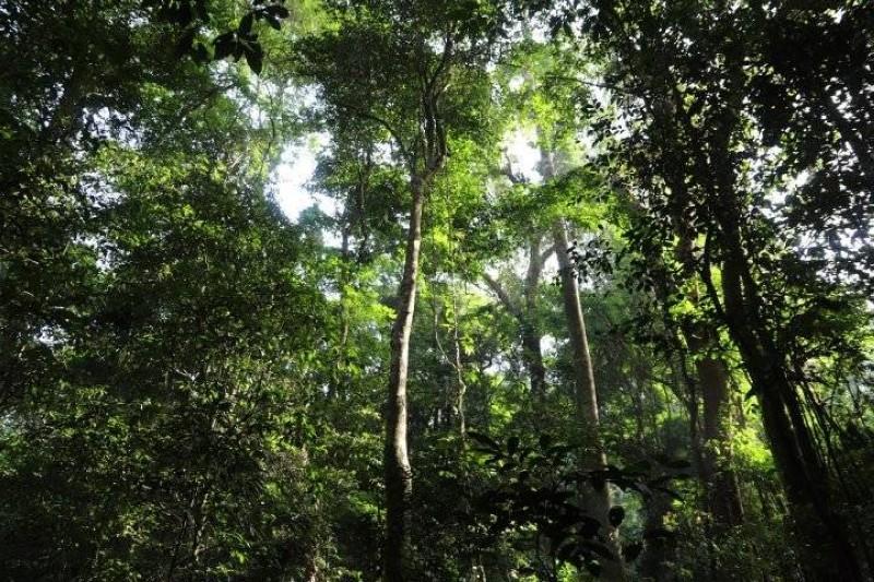 La Côte d'Ivoire est formellement engagée à limiter ses émissions dues à la déforestation et la dégradation des forêts. (Dr)