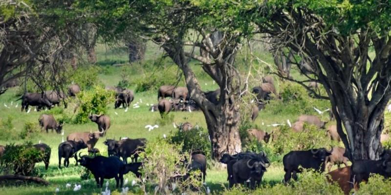 Les aires protégées de Côte d'Ivoire dont le parc national de Taï, ici, bénéficient d'une attention plus grande de la part des autorités compétentes. (Dr)