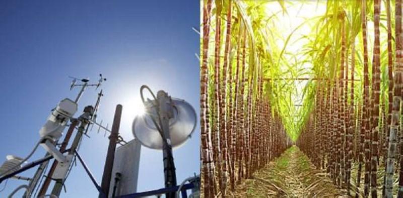 Le projet Climsucaf pour une meilleure production de la canne à sucre. (Dr)