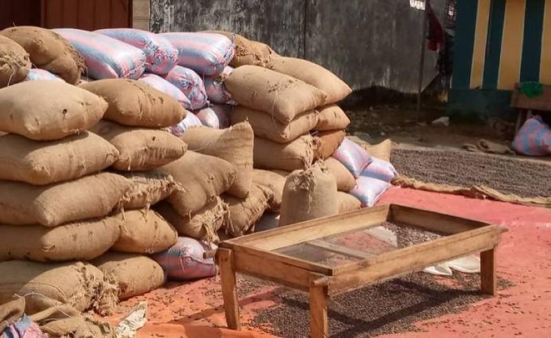 Des sacs de cacao stockés dans les entrepôts des coopératives à Abengourou (DR)