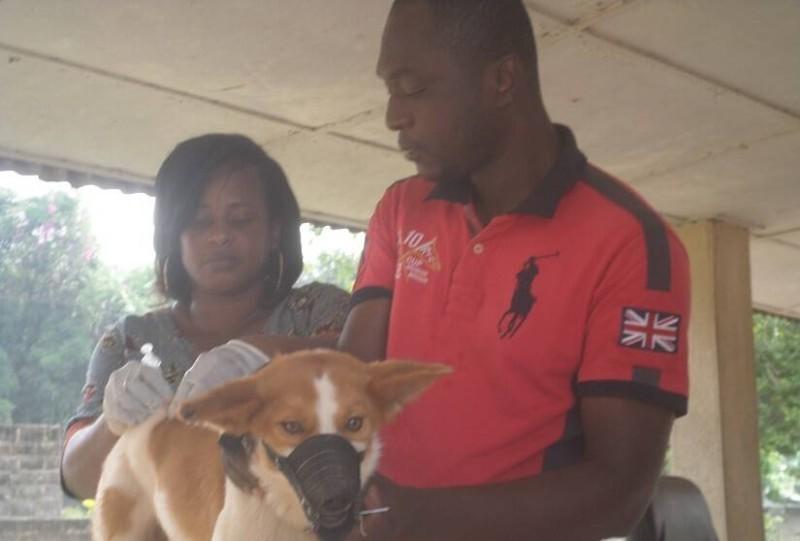 Cette campagne orientée vers les chiens et les chats s'inscrit dans le plan national d'éradication de la rage. (DR)
