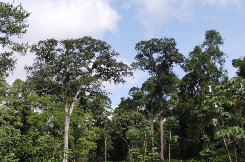 Le groupe Sifca fait de la préservation des forêts, une priorité. (DR)
