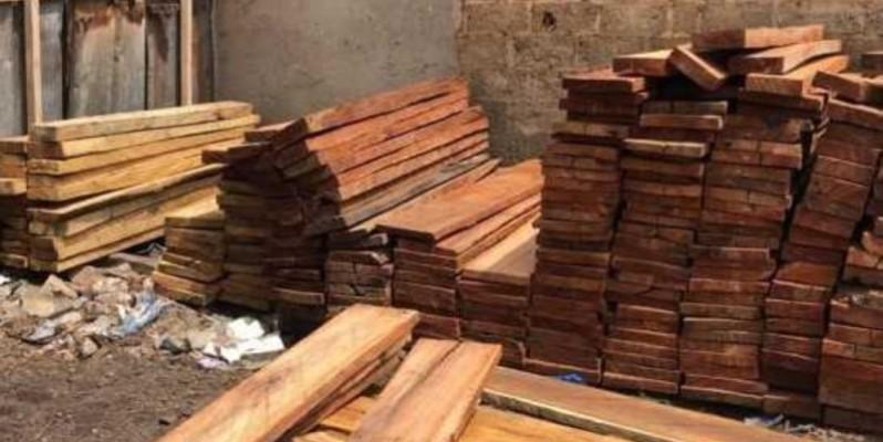 Du bois scié illégalement saisi à Abengourou.