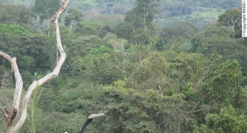 La forêt ivoirienne.
