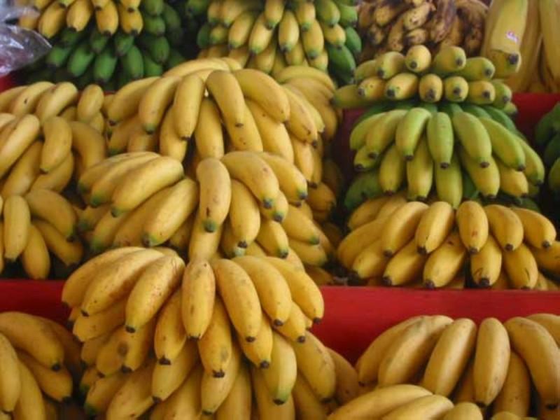La banane dessert d'origine ivoirienne est prisée en Europe pour sa qualité. (DR)