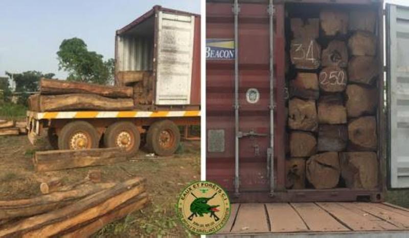 Une vue du bois de Vène dans des conteneurs. (DR)