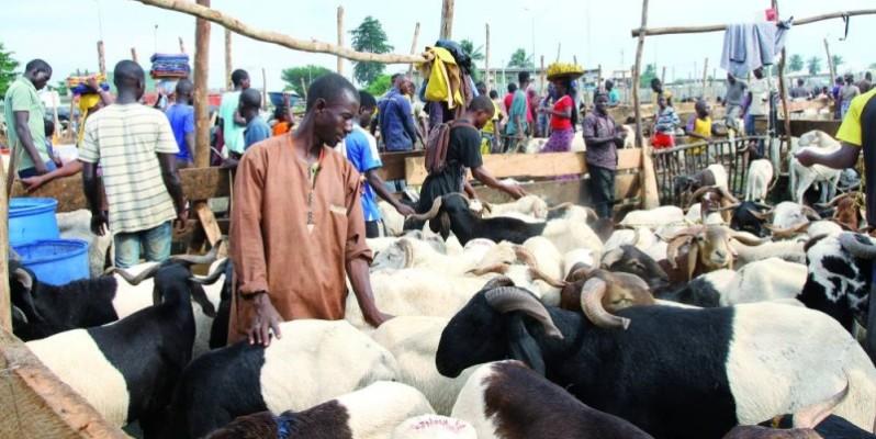 Enclos de vente de moutons. (Photo : Véronique Dadié)