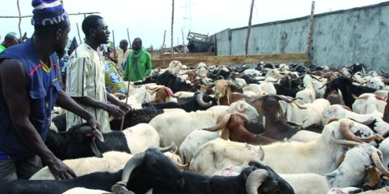 Malgré quelques difficultés, les marchés ont suffisamment été approvisionnés. (Photo : Véronique Dadié)